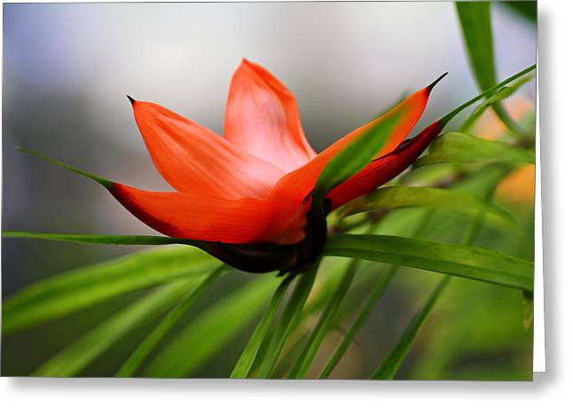 Exotic Greeting Card by Katherine White