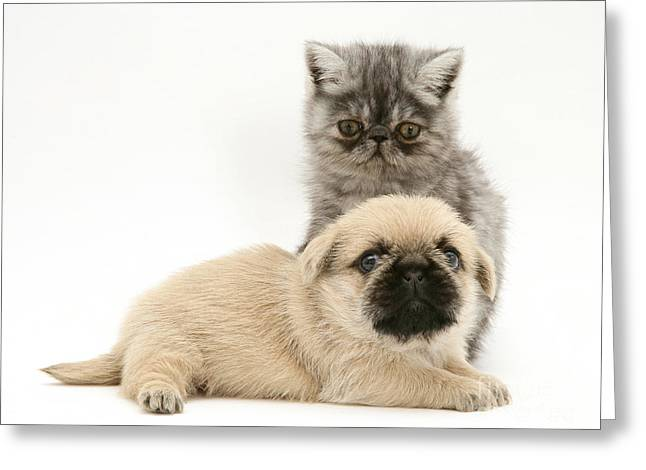 Exotic Kitten And Puppy Greeting Card