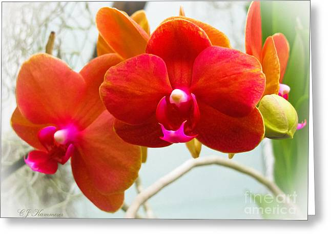Exotic Orchids Greeting Card by Colleen Kammerer