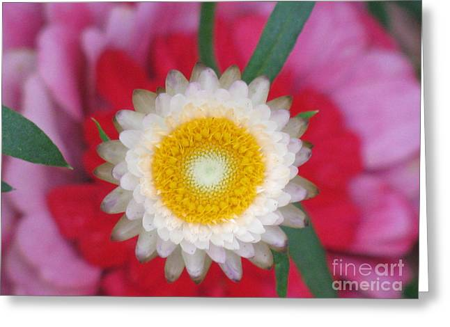Greeting Card featuring the photograph Eye Candy Photography by Tina Marie