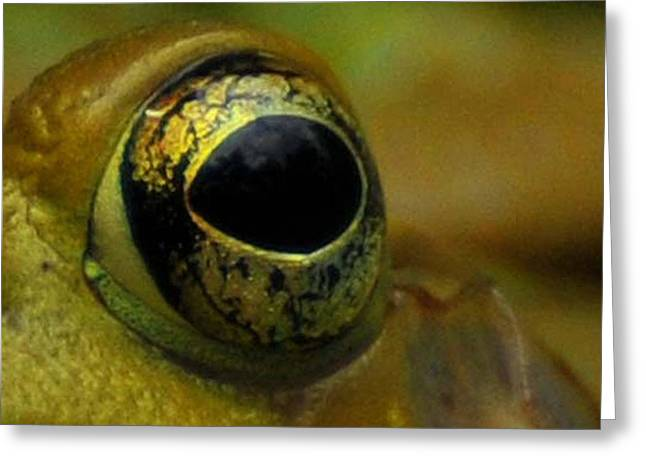 Eye Of Frog Greeting Card by Paul Ward