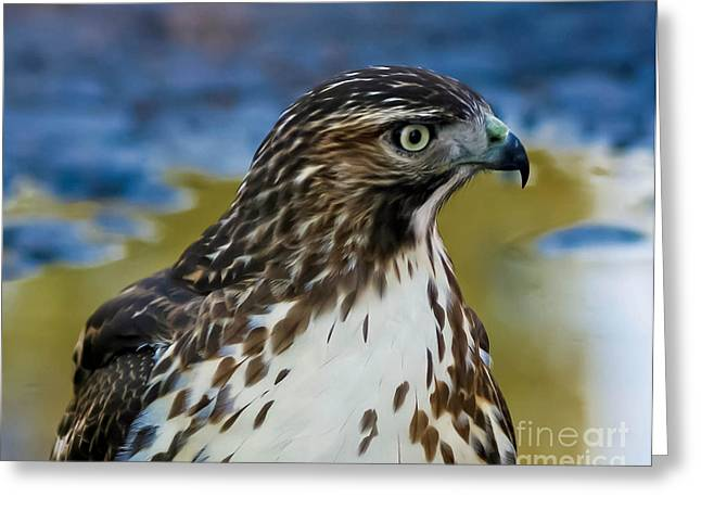 Greeting Card featuring the photograph Eye Of The Hawk by Mitch Shindelbower