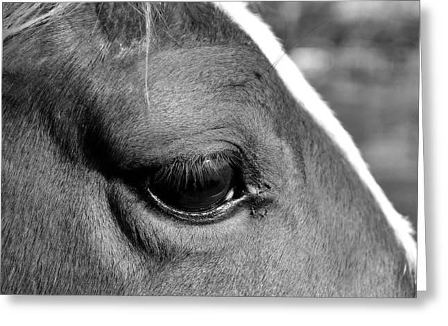 Eye Of The Horse Black And White Greeting Card by Sandi OReilly