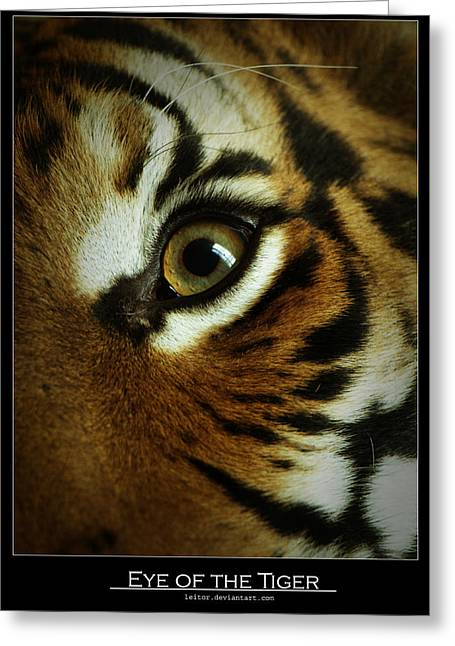 Eye Of The Tiger Greeting Card by Leito R