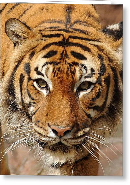Greeting Card featuring the photograph Eye Of The Tiger by Renee Hardison