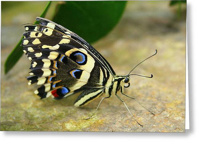 Eye To Eye With A Butterfly Greeting Card
