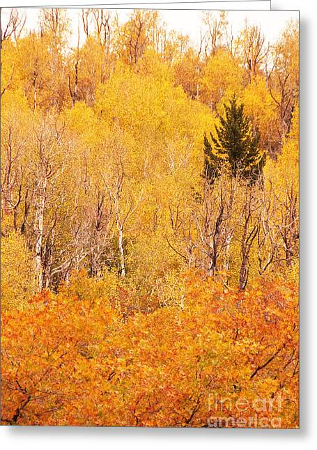 Eyeful Of Color Greeting Card by Bob and Nancy Kendrick