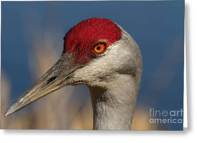 Eye'n You Greeting Card by Beve Brown-Clark Photography