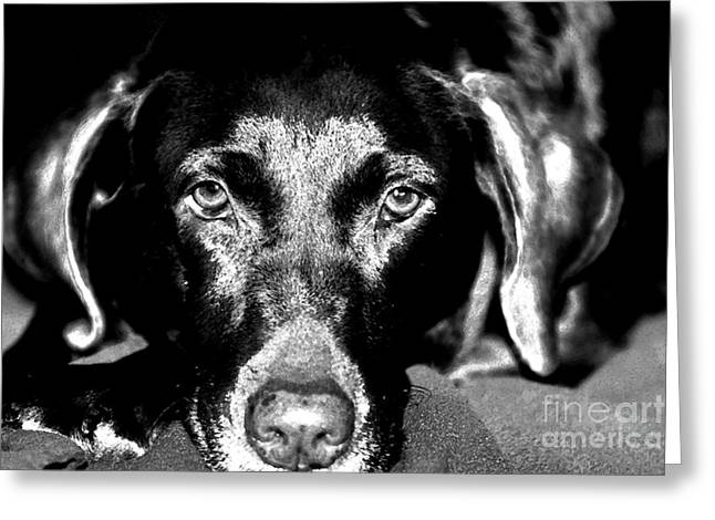 Greeting Card featuring the photograph Eyes by Leslie Leda
