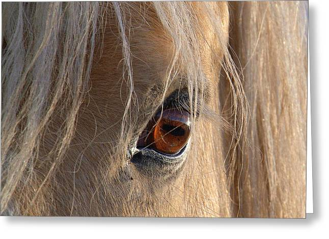 Eyes Of Beauty.. Greeting Card by Al  Swasey