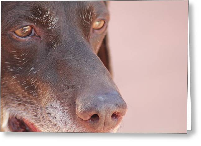 Greeting Card featuring the photograph Eyes Of The Hound by Carolina Liechtenstein
