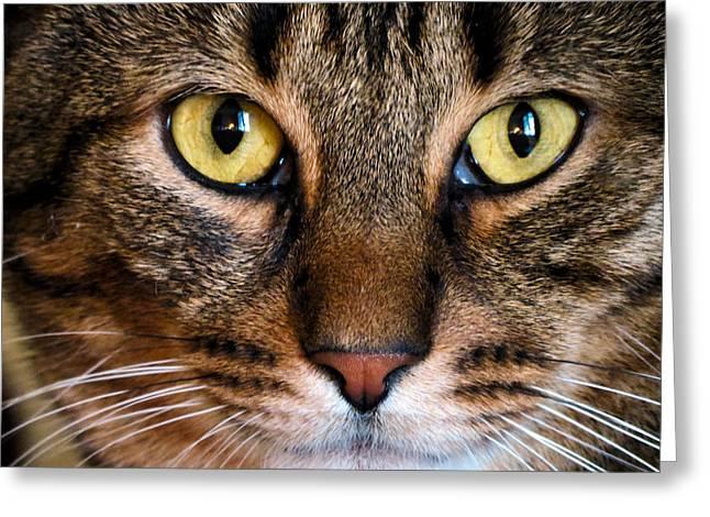 Face Framed Feline Greeting Card