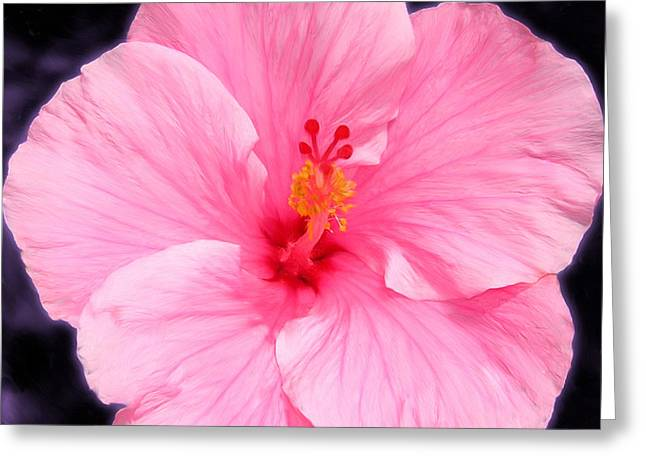 Face Hibiscus Greeting Card by Marcos Porcayo