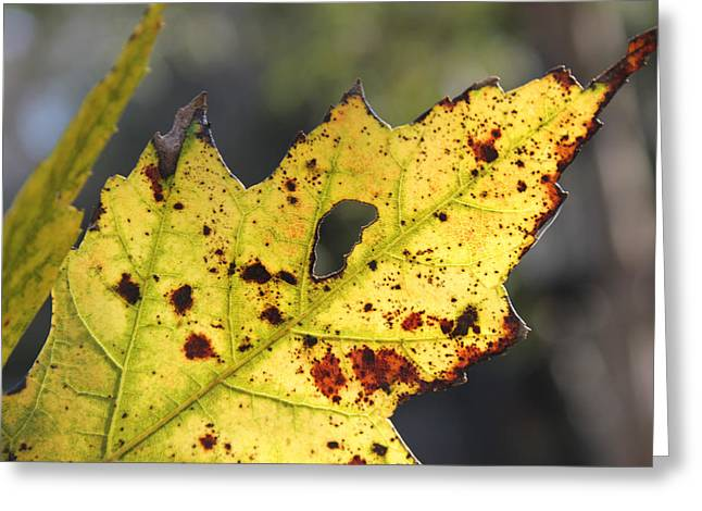 Face Of A Leaf Greeting Card