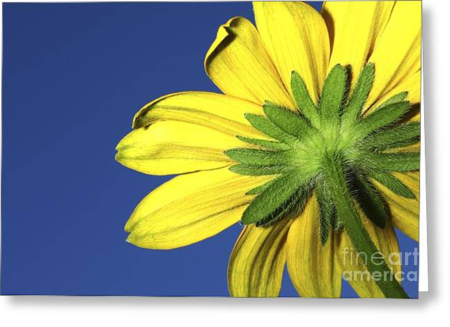 Greeting Card featuring the photograph Facing The Sun by Sherry Davis