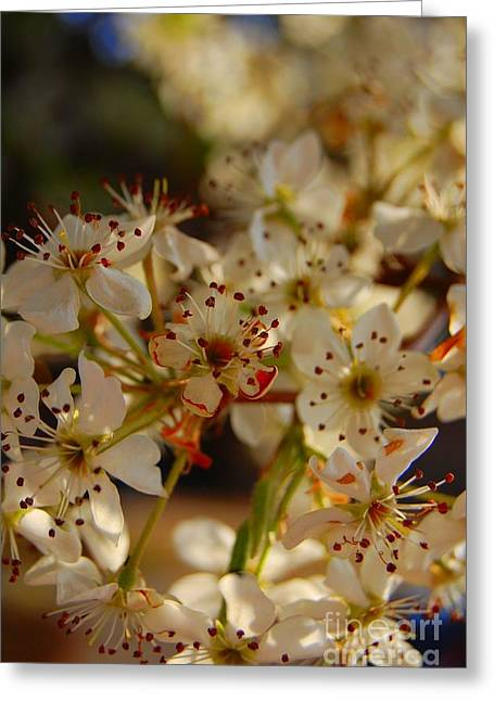 Faded Blossom Greeting Card