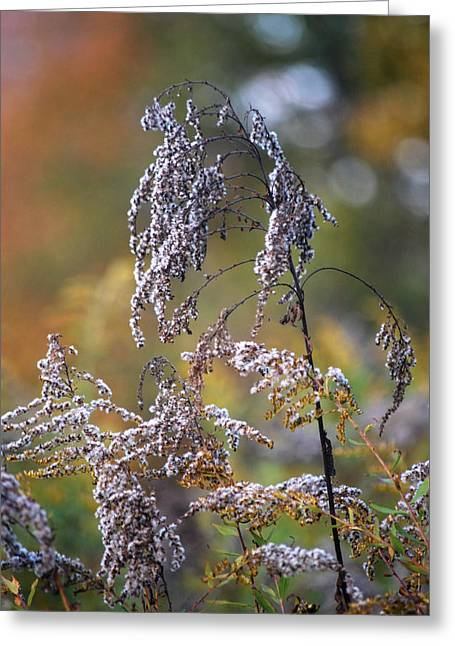 Fading Color Greeting Card by Kimberly Deverell