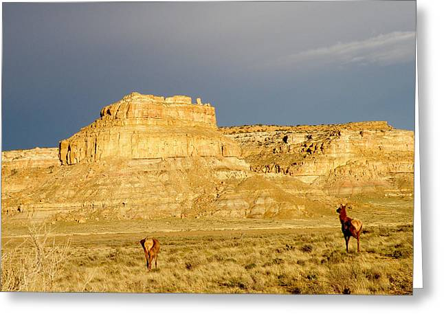 Fajada Butte At Sunset With Elk Greeting Card by Feva  Fotos