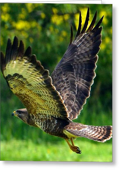 Falcon In Flight Greeting Card
