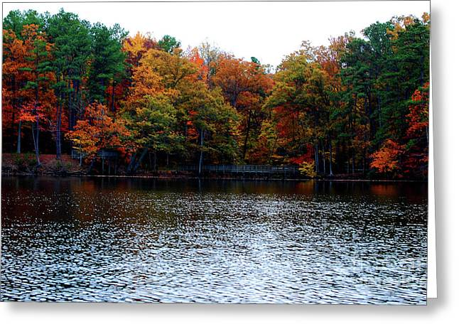 Fall Across The Lake Greeting Card by Linda Mesibov