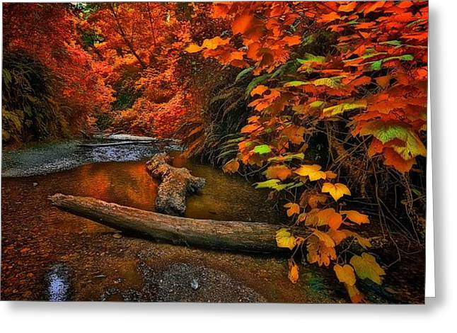 Fall Along The Creek Greeting Card