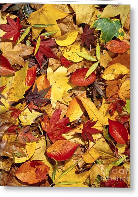 Fall  Autumn Leaves Greeting Card by Bruce Stanfield
