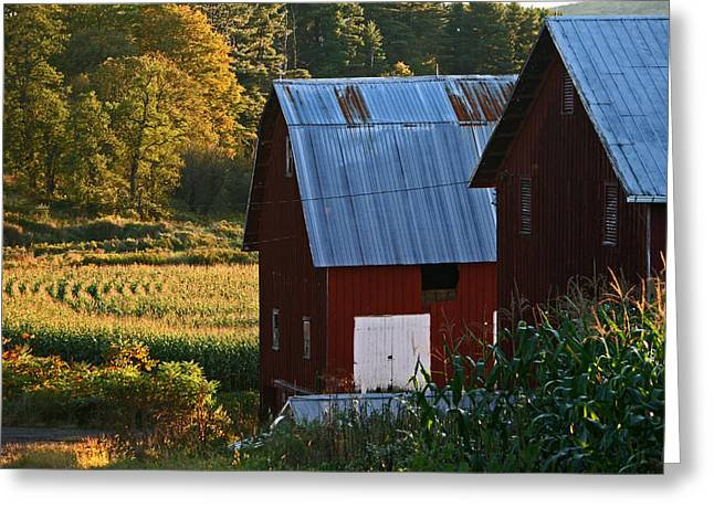 Fall Barns Greeting Card