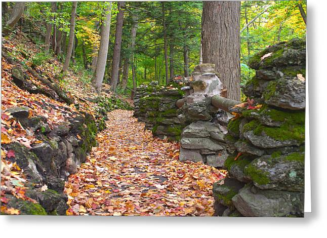 Fall Carpet Greeting Card by Cindy Haggerty