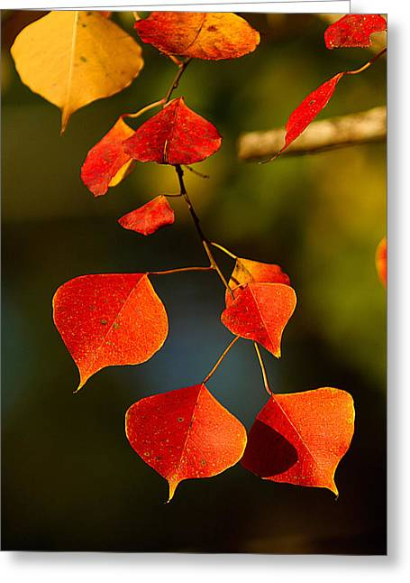 Greeting Card featuring the photograph Fall Color 2 by Dan Wells