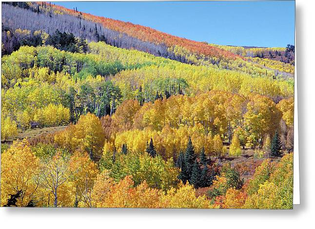 Fall Color Aspen Near Dolores Colorado Greeting Card by John Brink