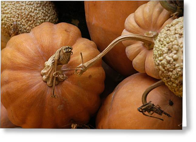 Fall Color Greeting Card by Greg Kopriva