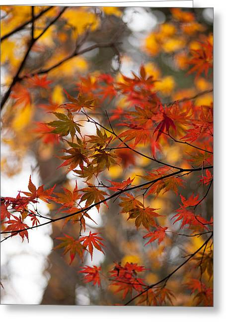 Fall Color Montage Greeting Card by Mike Reid