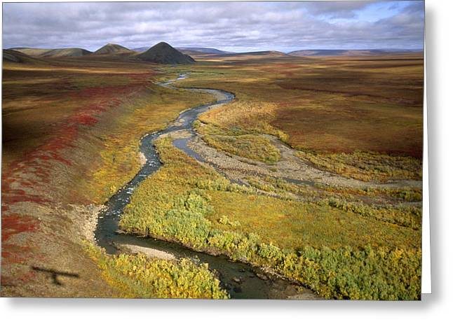 Fall Color On The Central North Slope Greeting Card by Joel Sartore