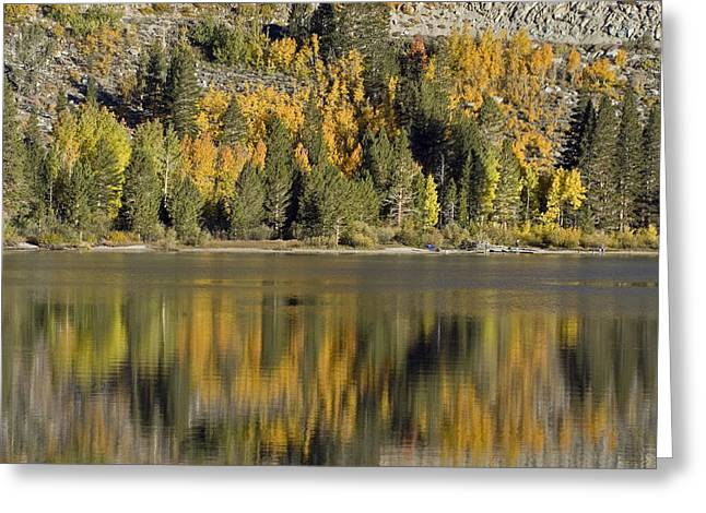 Fall Color Reflection And Tree Greeting Card by Rich Reid