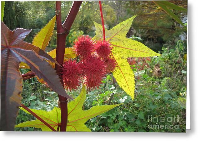 Fall Color Greeting Card by Richard Nickson