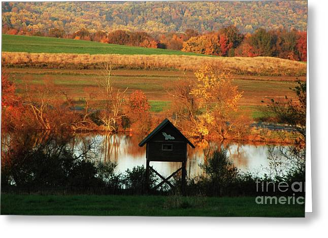 Greeting Card featuring the photograph Fall Colors 1 by Vilas Malankar