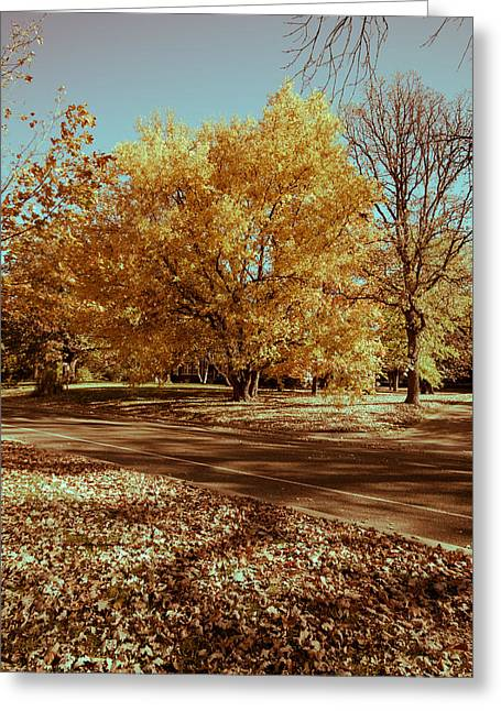 Fall Colors 11 Greeting Card