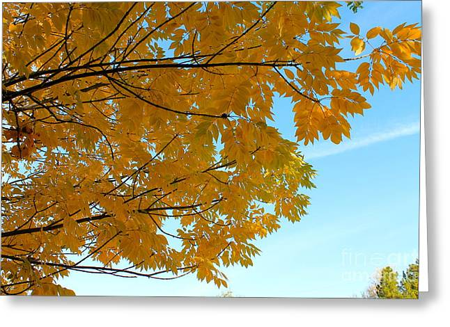 Fall Colors 111 Greeting Card by Pamela Walrath