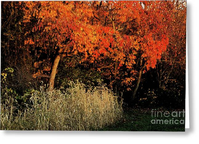Greeting Card featuring the photograph Fall Colors 2 by Vilas Malankar