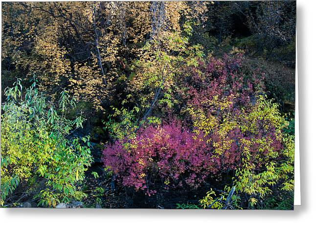 Greeting Card featuring the photograph Fall Colors Alaska by Gary Rose