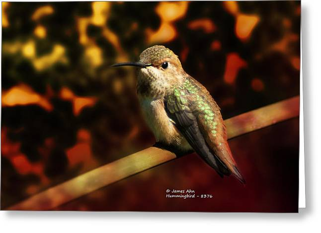 Fall Colors - Allens Hummingbird Greeting Card by James Ahn