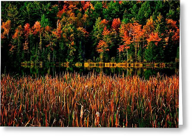 Fall Colors Greeting Card by Andre Faubert