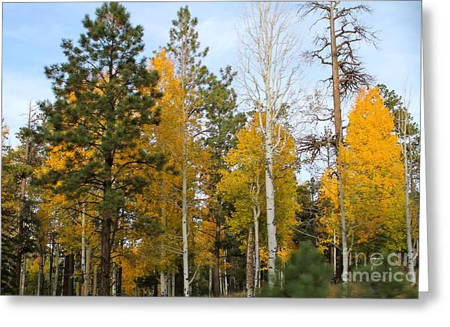 Fall Colors Aspen Greeting Card by Pamela Walrath