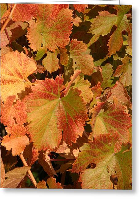 Fall Colors Greeting Card by Diane Bohna