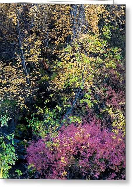 Greeting Card featuring the photograph Fall Colors by Gary Rose