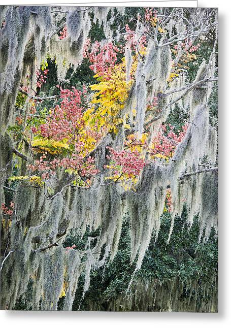 Fall Colors In Spanish Moss Greeting Card by Carolyn Marshall