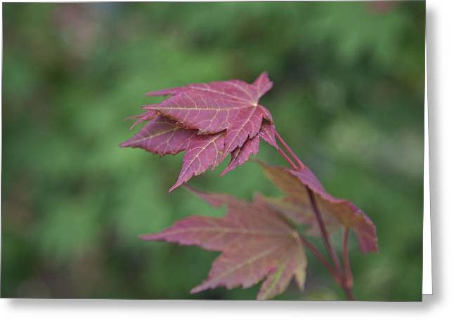 Fall Colors Greeting Card by Molly Heng