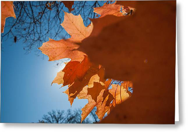 Fall Colors Nine Greeting Card