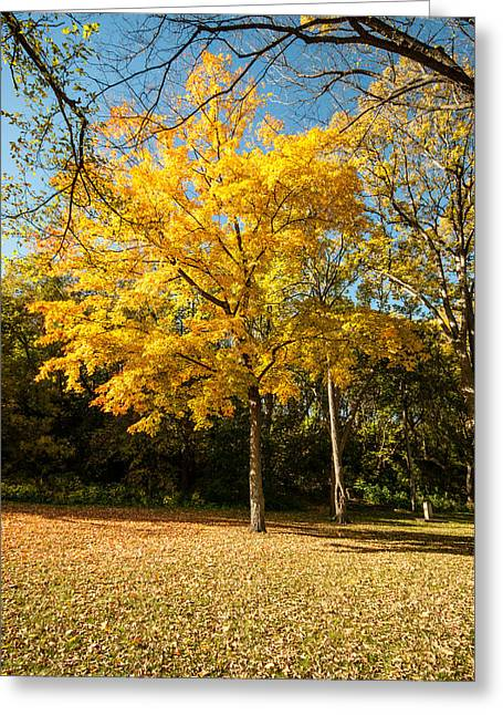 Fall Colors Six Greeting Card
