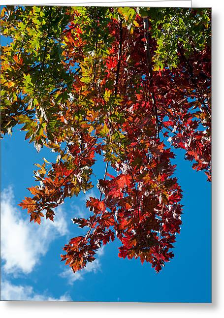Fall Colors Two Greeting Card